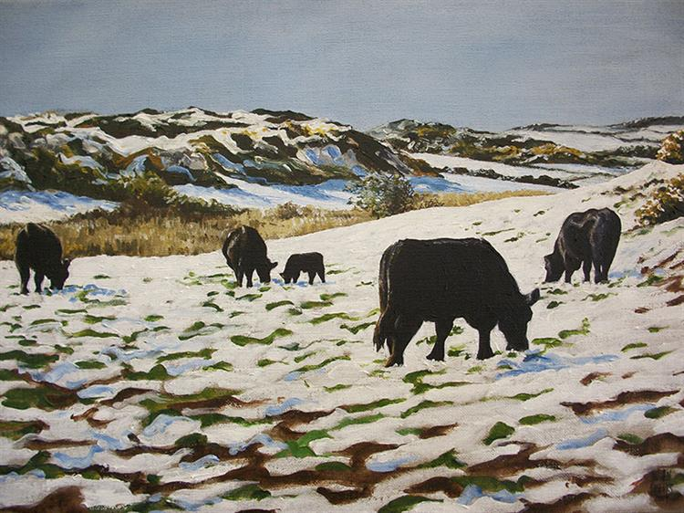 Welsh Blacks in the snow no.2