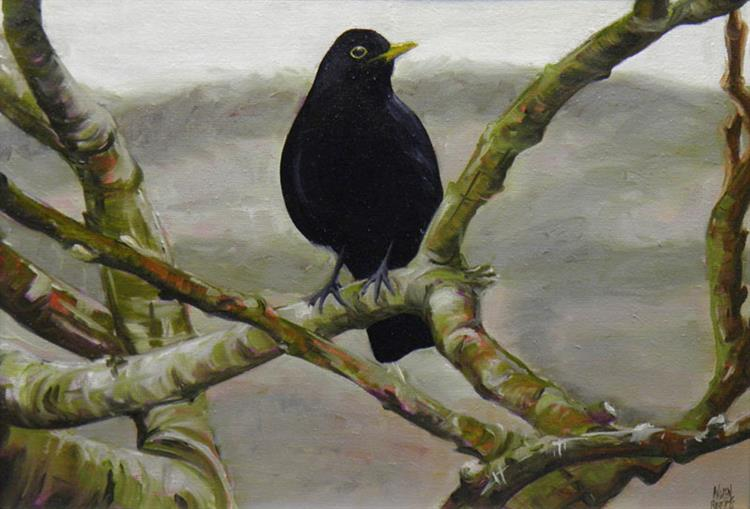 Blackbird in the branches
